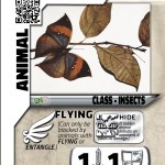 W_12IndianLeafwing