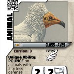 W_19EgyptianVulture